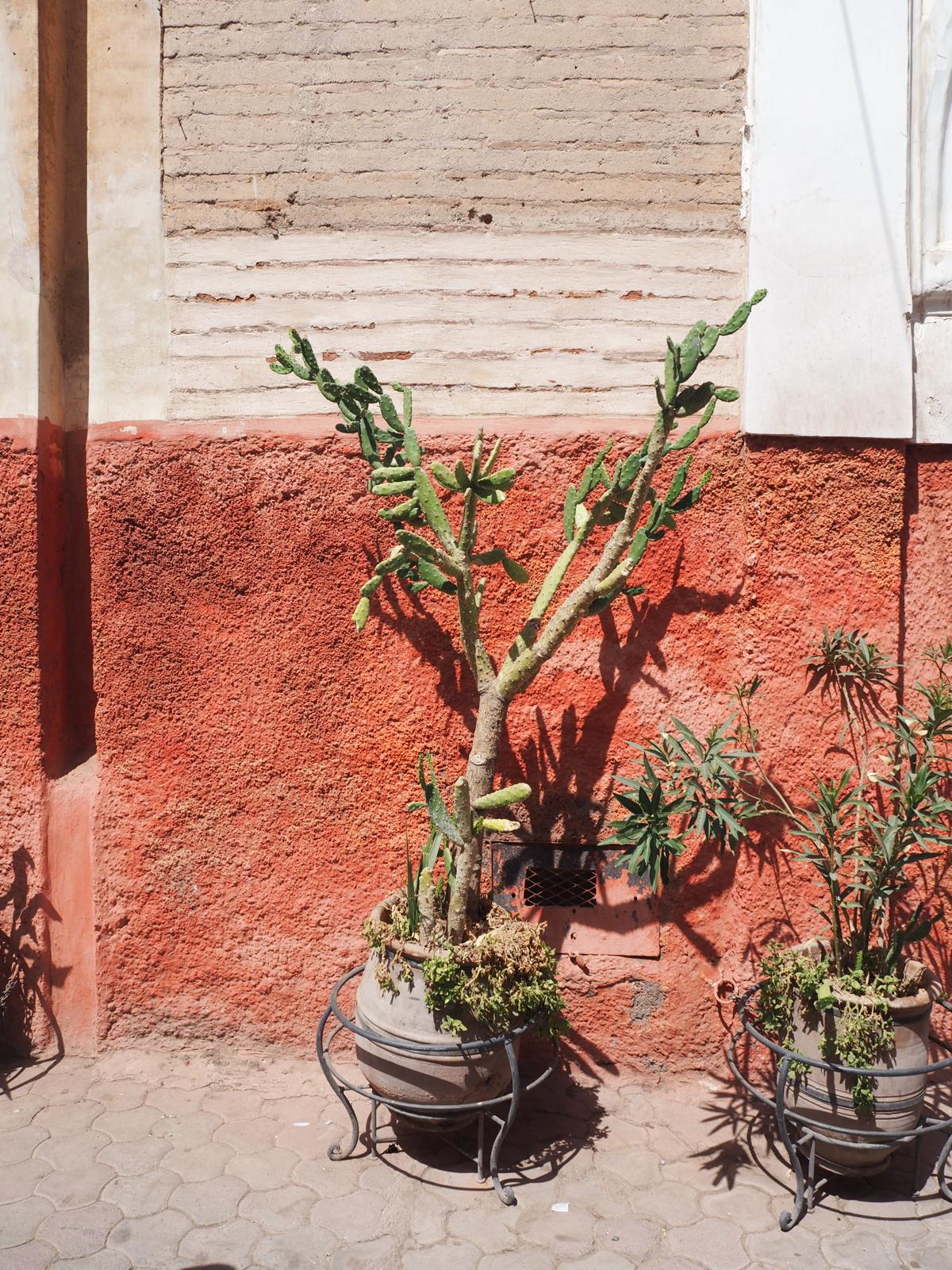 bare-minds-elina-neumann-marrakesch-marokko-5
