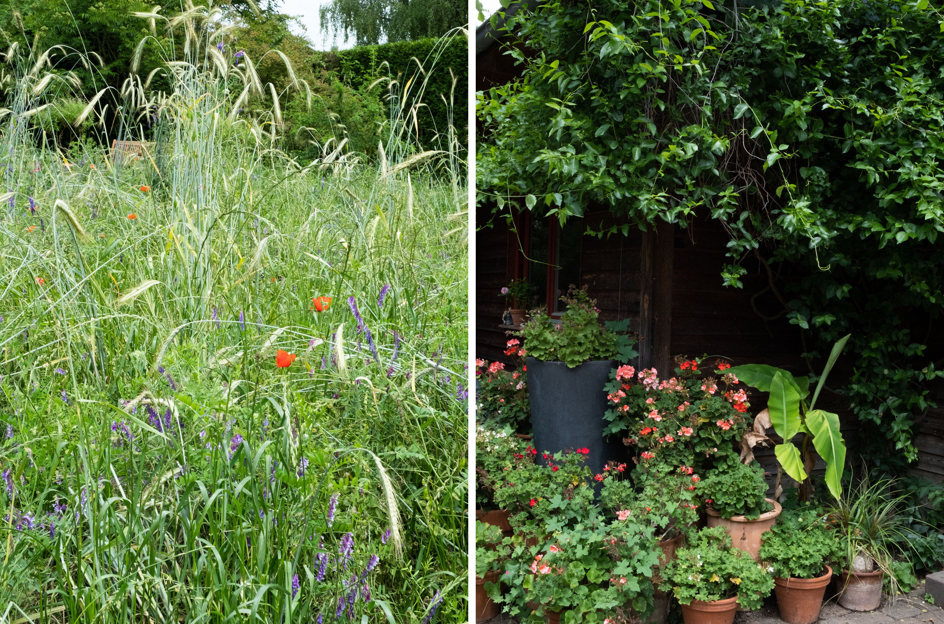 Beautyblog Dr. Hauschka Heilpflanzen 2