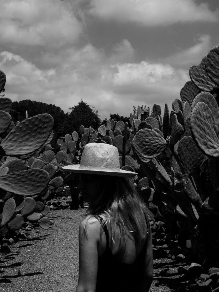 Beautyblog Südafrika Weinfarm Babylonstoren Kaktusgarten