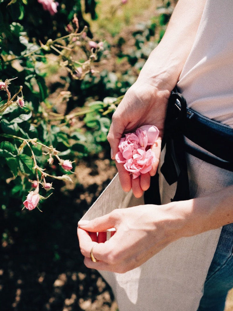 Beautyblog-Grasse-Mairosenernte-Chanel-N°-5
